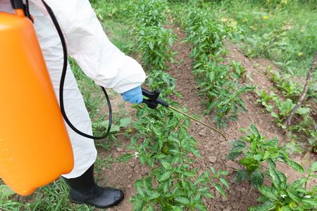 Farmer spraying toxic pesticides in the vegetable garden