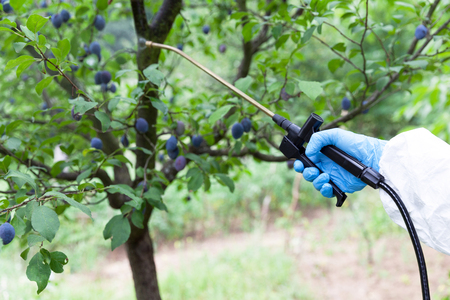 Farmer spraying toxic pesticides or insecticides in an orchard Zdjęcie Seryjne