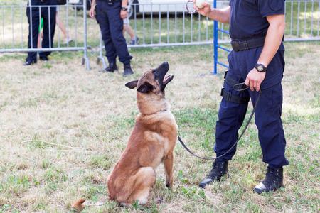 Polizist mit belgischem Polizeihund Malinois