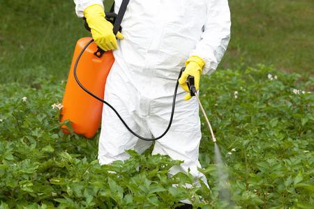 Boer spuiten giftige pesticiden in de moestuin Stockfoto