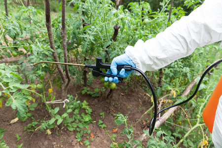 Herbicide spraying. Non-organic vegetables.