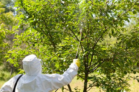 Farmer spraying toxic pesticides or insecticides in fruit orchard 版權商用圖片