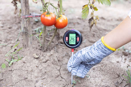 Soil temperature, moisture content and environmental humidity measurement in a vegetable garden. Global warming concept. 版權商用圖片