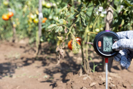 Measuring temperature, moisture content of the soil and environmental humidity in a vegetable garden. Global warming concept. 版權商用圖片