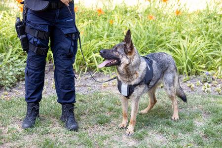 Policewoman with German shepherd police dog