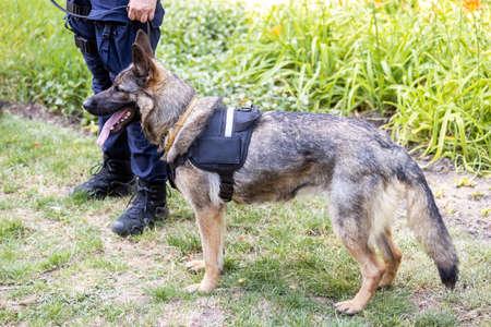 Policeman with German shepherd police dog