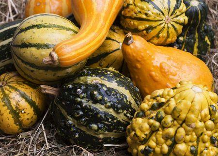 bounty: Colores de otoño calabazas sobre un lecho de paja