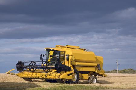 combine harvester: Cosechadora de granos de corte a finales del verano