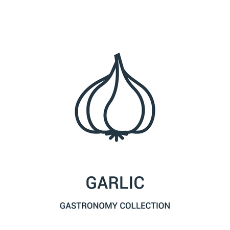 garlic icon vector from gastronomy collection collection. Thin line garlic outline icon vector illustration. Linear symbol for use on web and mobile apps, logo, print media. Ilustração