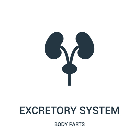 excretory system silhouette icon vector from body parts collection. Thin line excretory system silhouette outline icon vector illustration. Linear symbol for use on web and mobile apps, logo, print