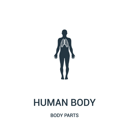 human body silhouette with focus on respiratory system icon vector from body parts collection. Thin line human body silhouette with focus on respiratory system outline icon vector illustration. Linear