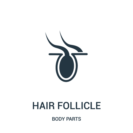 hair follicle icon vector from body parts collection. Thin line hair follicle outline icon vector illustration. Linear symbol for use on web and mobile apps, logo, print media.
