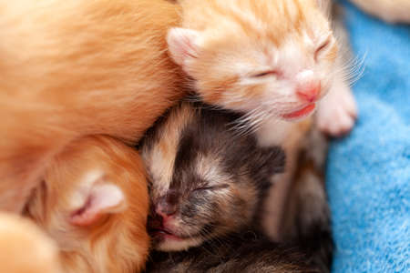Very close small kittens - newborn cats