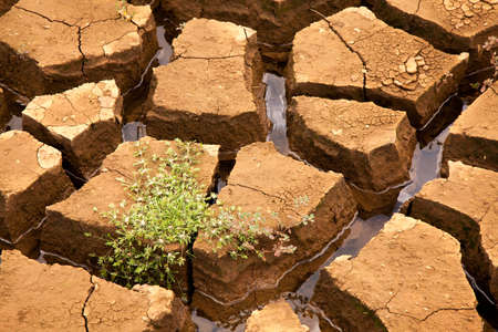 Drought soil with vegetation in brazilian dam
