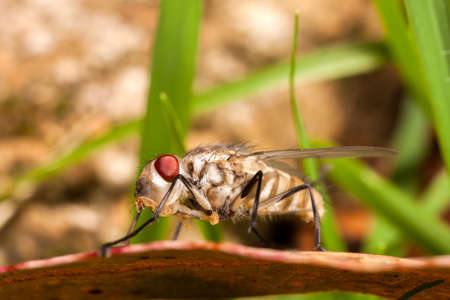 Young newborn house fly - housefly baby