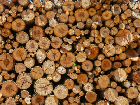 Eucalyptus fire wood trunk piled up texture - pattern Stock Photo