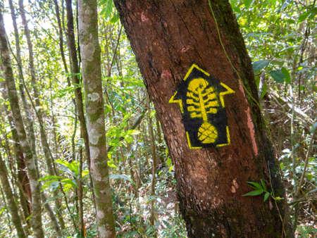 Trail marks in Transmantiqueira long trail hike - mantiqueira range Brazil Reklamní fotografie