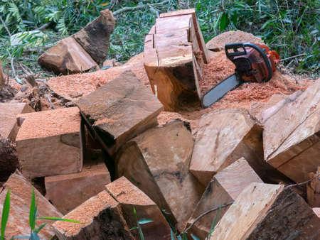 Wooden cube pile cut tree eucaliptus deforestation