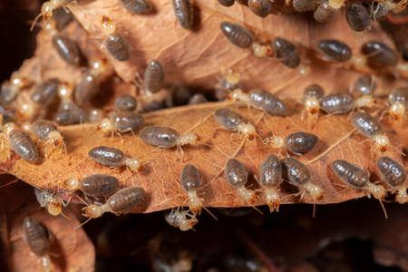 Termites on leave macrophotography animal Stock Photo
