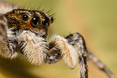 A beautiful jumping spider Stock Photo