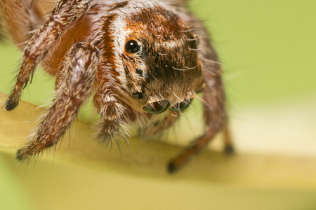 A beautiful and tiny jumping spider Stock Photo