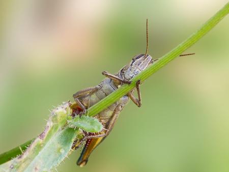 A grasshopper on a stick