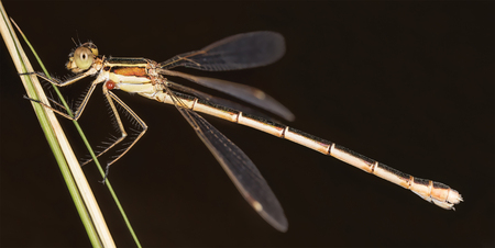 A beautiful close-up portrait of a beautiful damselfly Stock Photo