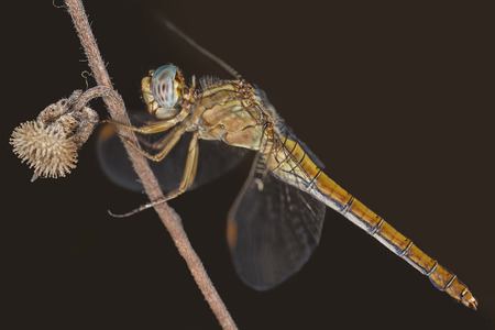 enlargement: A close-up of a beautiful dragonfly Stock Photo