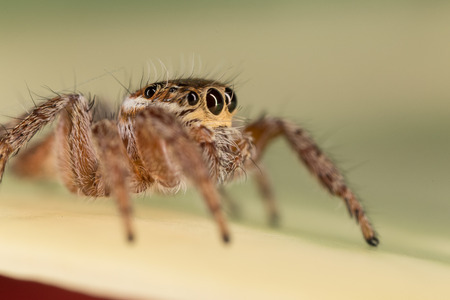 A closeup of a  beautiful spider Stock Photo