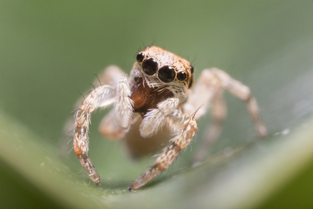 enlargement: A closeup of a  beautiful spider Stock Photo