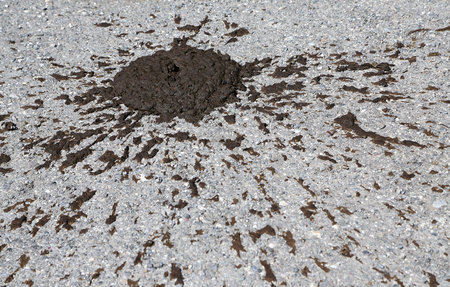 cow dung on street