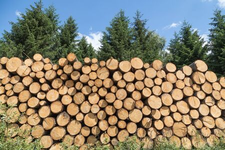 Stacked tree trunks in coniferous forest
