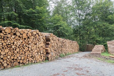 Woodpiles Forest