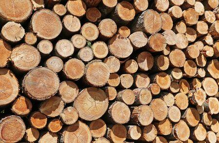 Texture of stacked tree trunks Zdjęcie Seryjne