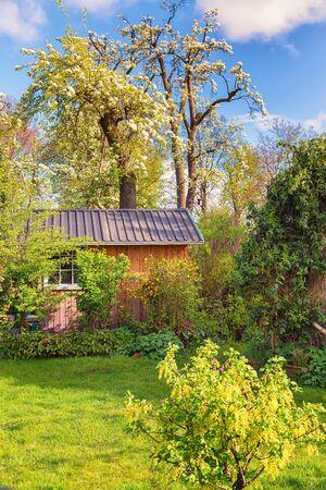 Green garden with cabin in springtime Zdjęcie Seryjne