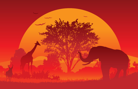 Animals gather at an African Sunset.  Vector