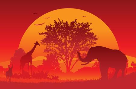 Dieren verzamelen bij een Afrikaanse zonsondergang.