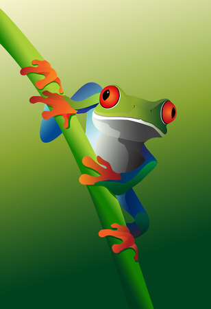 An illustration of a Red-Eyed Tree Frog (Agalychnis callidryas) on a plant stem.