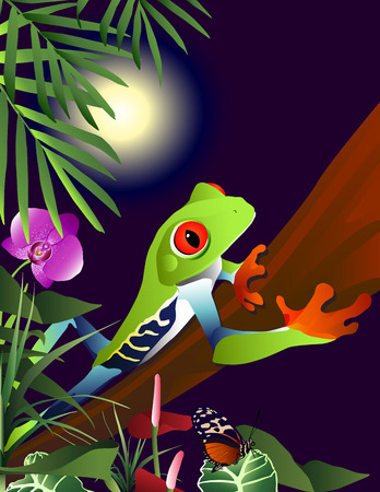 An illustration of a Red-Eyed Tree Frog (Agalychnis callidryas) climbing along a vine in the jungle at night. Detailed illustrations of tropical plants and a butterfly are also visible lit by the bright full moon in the distance. Illustration