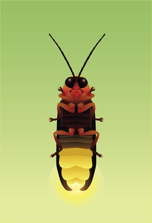 A detailed illustration of a firefly with its bottom lit up