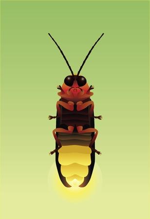 Eine detaillierte Darstellung eines firefly mit ihrer Unterseite leuchtet Standard-Bild - 9934543