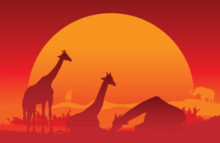 An illustration of a family of giraffes against an African sunset Vector