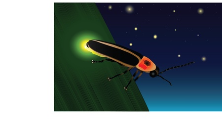 A firefly on a leaf showing off its yellow glow light in search for its mate. 일러스트