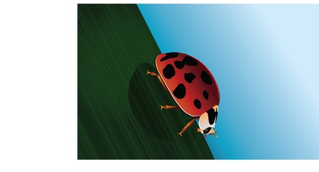 An detailed illustration of a close up of a ladybug on a single blade of grass.