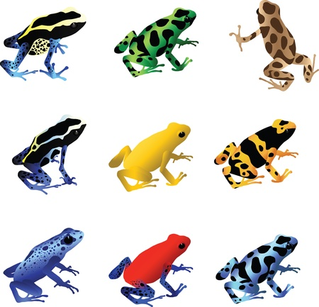 An illustration of a collection of 9 different species of poison dart frogs