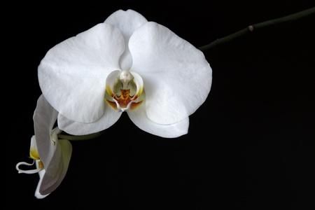 Orquídea blanca Foto de archivo - 10049870