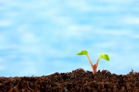 sprouting: Seedling