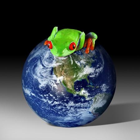 Frog on Earth