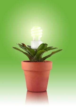 Eco plant Stock Photo - 10049716