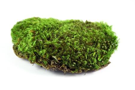 Green moss patch Standard-Bild